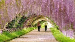 Spring-Garden-1920x1080